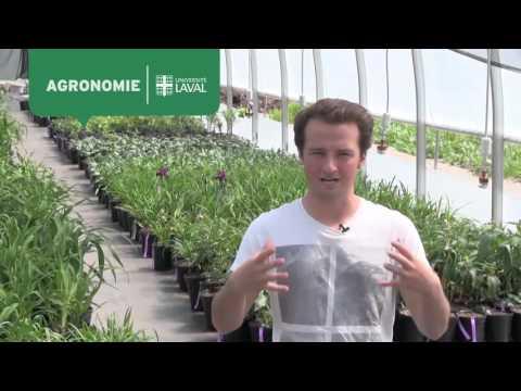 Mathieu Ouellette, diplômé en agronomie
