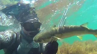 Подводная охота в Чёрном море - Охота в разных условиях