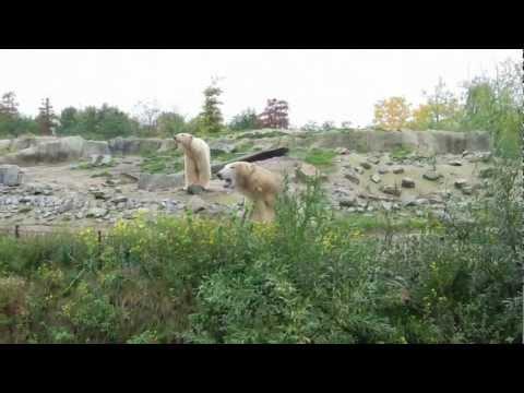 Laatste dag Vicks in Diergaarde Blijdorp - Last day in Rotterdam Zoo