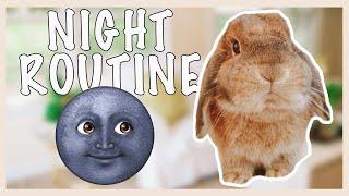 Bunny Night Routine