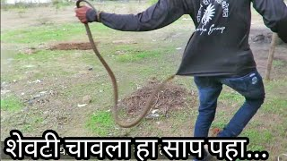 शेवटी चावला हा साप पहा...