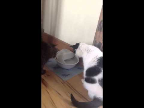 Pioneer Pet Ceramic Drinking Fountain Raindrop Design Youtube