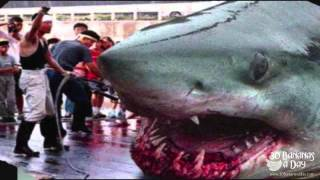 Megalodon Shark Caught By Japanese Fisherman Real Or Fake?
