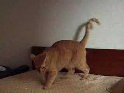 cat walking with head down