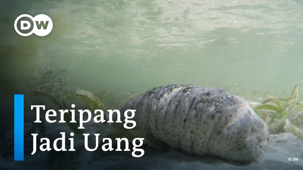 78 Gambar Binatang Laut Teripang Gratis Terbaru