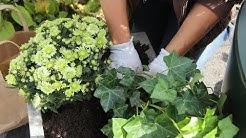 Vaihda kesäkukkien tilalle syksyä kestävät kasvit