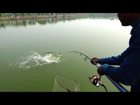 Curious Catla Fishing