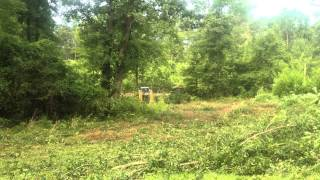 Track Loader Moving Trees