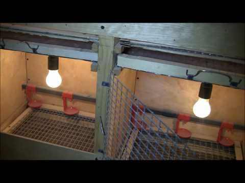 видео: Клеточная батарея для содержания молодняка птиц