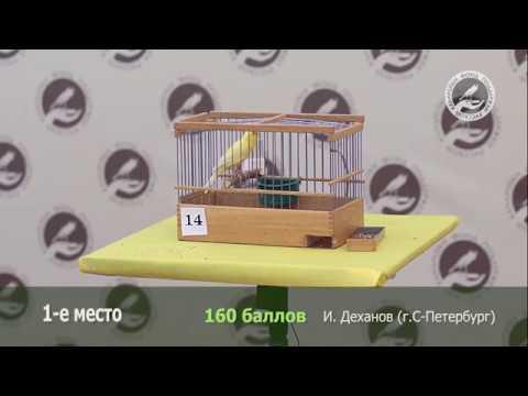 13-й весенний конкурс пения канареек. 1-е место