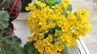 Как подкармливать комнатные цветы  Удобрения для роз, орхидей и кактусов