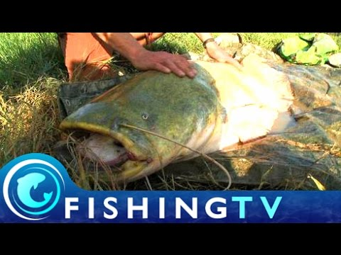 Fishing The River Ebro for Catfish - Fishing TV
