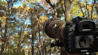 Shooting video with a Canon 7D Mark II with 800mm with 2x extender