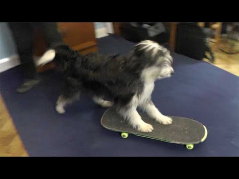 Teaching dog tricks: skateboarding with Chris Mancini