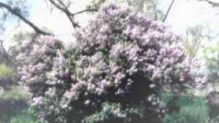Beatrice Lillie - I Hate Spring