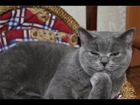 Как мой интеллигентный кот взбунтовался!