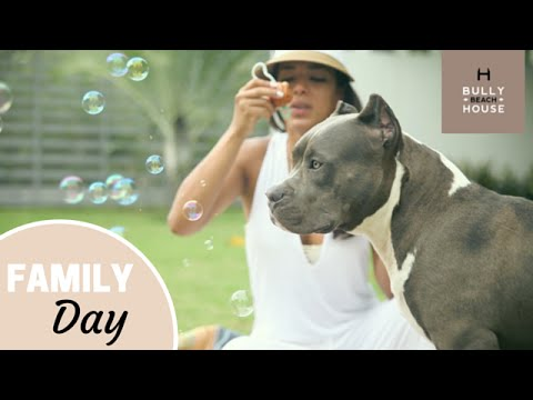 XXL Pitbulls - Bully Beach House Stories - Family Day (1 of 10)