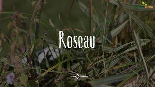 Roseau : conseils d
