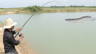 We Survival - Catching Cat fish and Tilapia fish