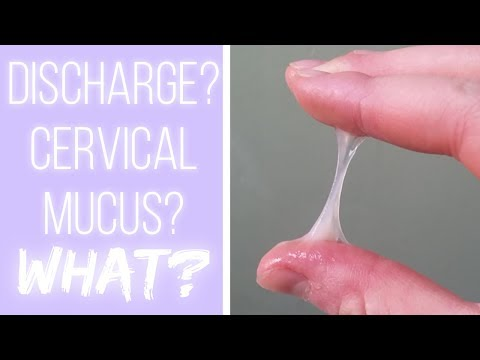 what's-cervical-mucus?-the-cervical-mucus-project
