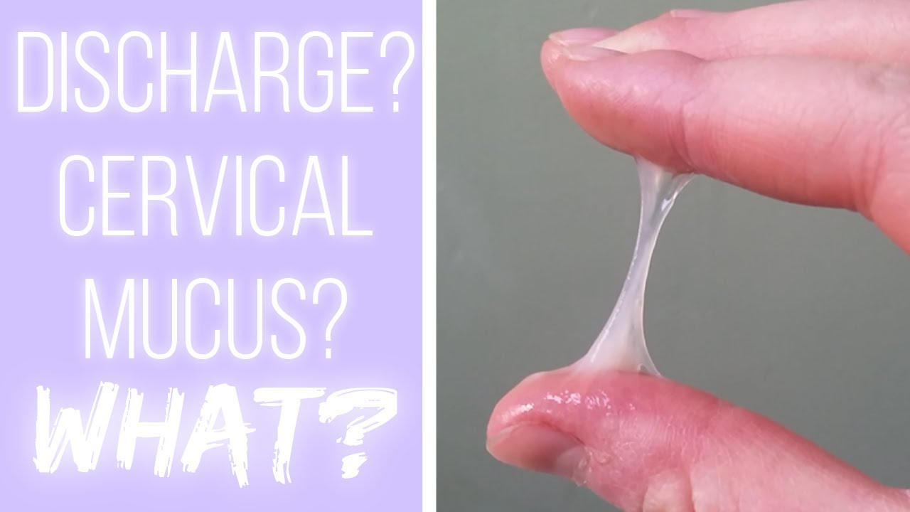 What's Cervical Mucus? The Cervical Mucus Project