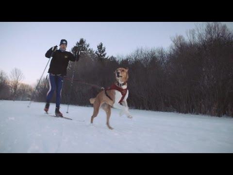 Skiing + Man's Best Friend = Skijoring