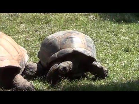 Des Moines Zoo 2013