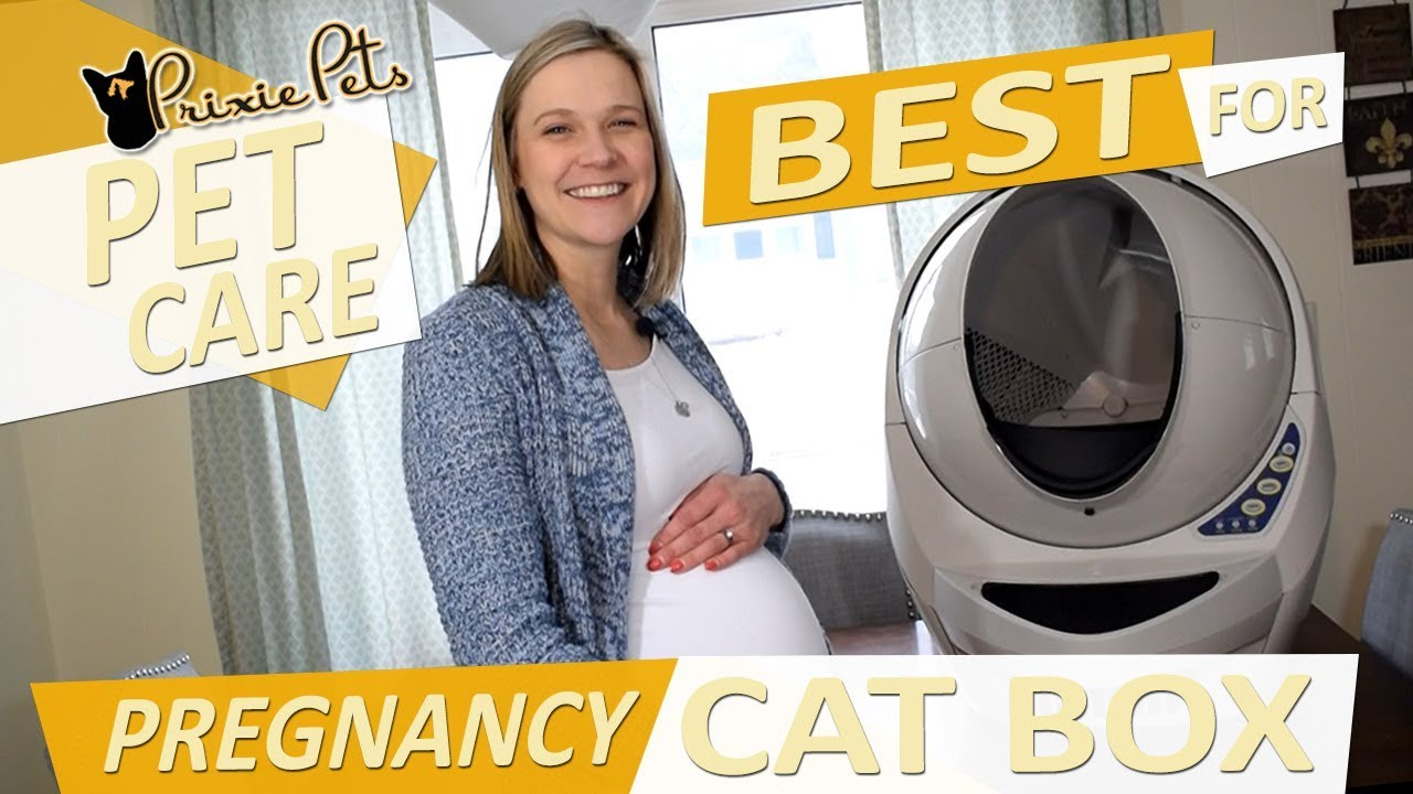 Best Cat Litter Box for Pregnant Women - Toxoplasmosis