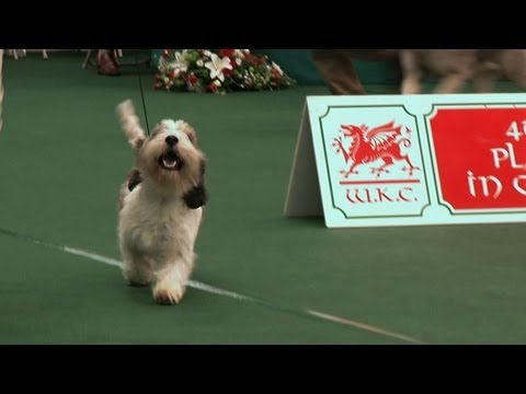 Around the Dog World - Welsh Kennel Club and Gundogs (Ep 11)