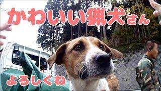 こんにちは!yamanekoです。滋賀では今年猟期が二週間ほど早まりました...