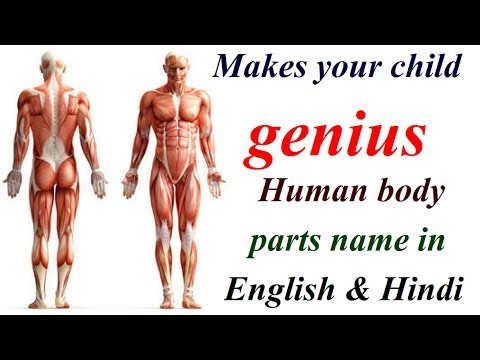 Main Human body parts names In English and Hindi,Branded ...