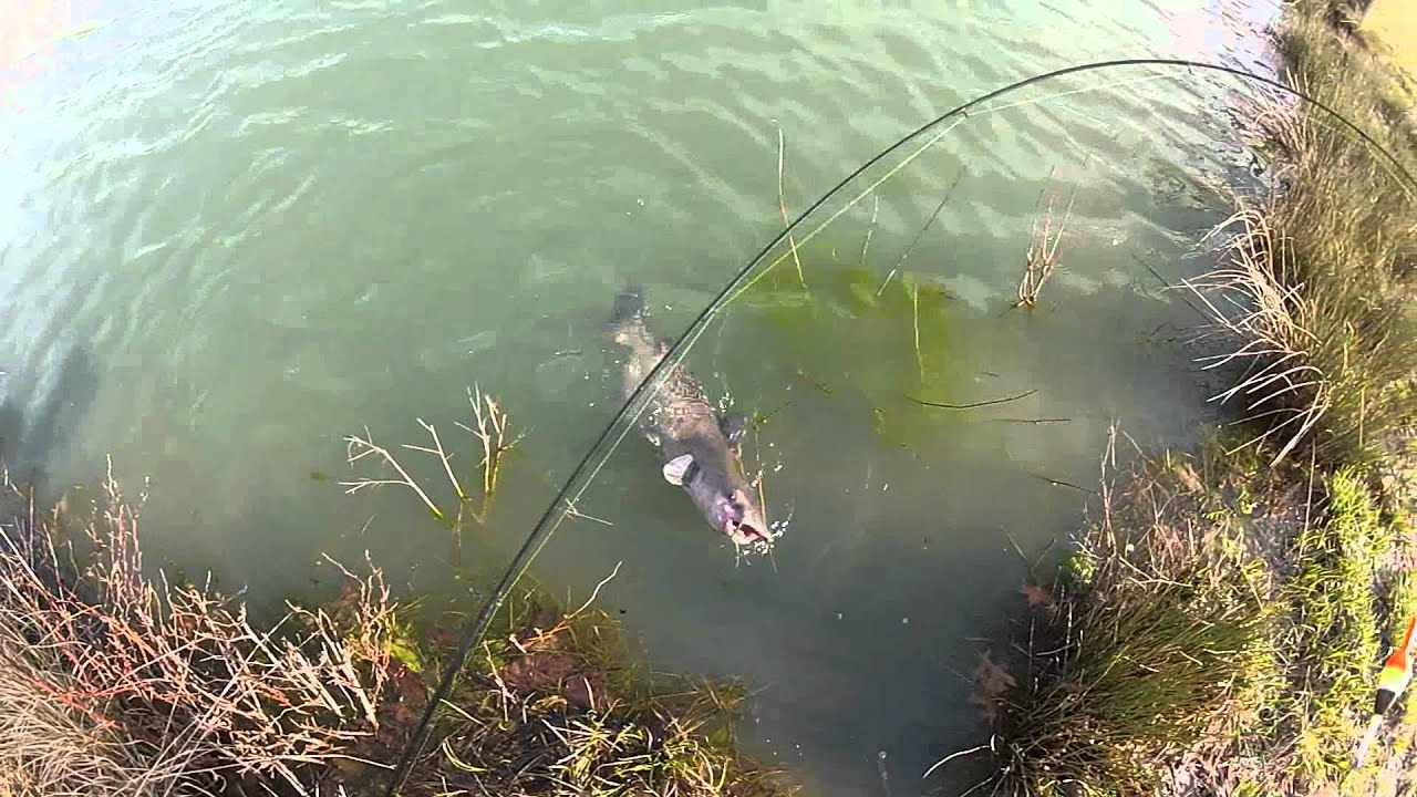 Catfish on a Crappie Pole