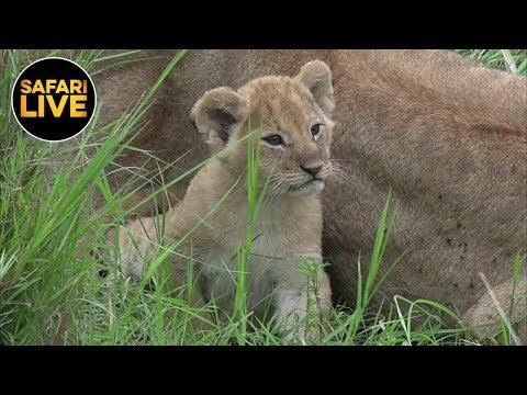 safariLIVE - Sunrise Safari - January 10, 2019