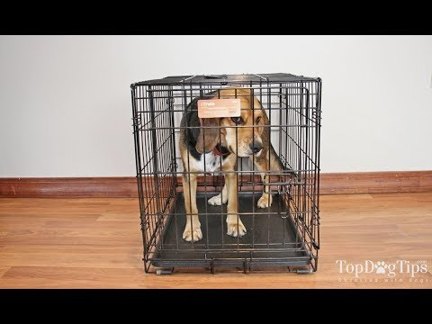 Midwest ICrate Folding Metal Dog Crate Review (2018)