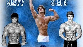 Jeff Seid - Motivation Fitness