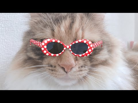 【待望】遂にSNOWで猫が検出できるようになった!!