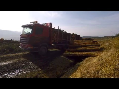 UK Forestry and Wood: Economy