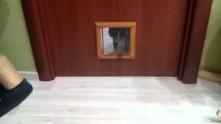 Маленькая дверь для маленького друга