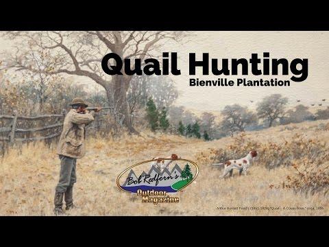 Quail Hunting at Bienville Plantation with Bob Redfern