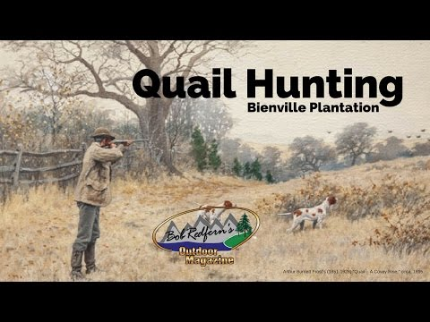 Quail Hunting At Bienville Plantation With Bob Redfern