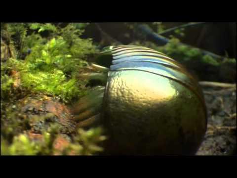 Safri Duo - Samb Adagio (Infite Emotional mix ) / Life in the  World HD  video