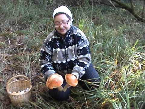 Сбор грибов: белые, подосиновики, маслята, ежовики