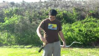 Shooting The Flattened Pvc Pipe Horse Bow With Wood Siyahs