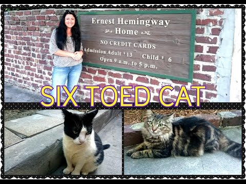 SIXTOED CATS Ernest Hemingway House Key West|Америка|Шестипалые кошки музей Хэменгуея|HelenLin