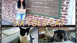 Америка|Шестипалые кошки музей Хэменгуея|Six toed cat Ernest Hemingway House Key West|HelenLin