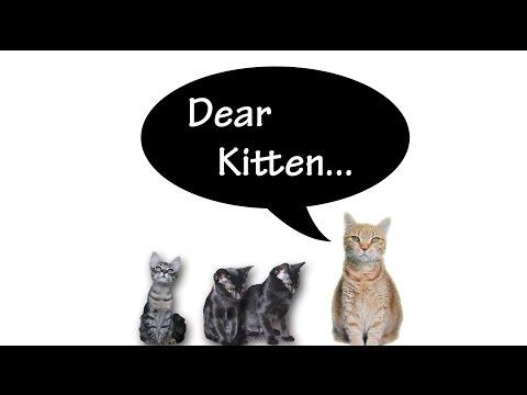 Dear Kitten... Shelter Life