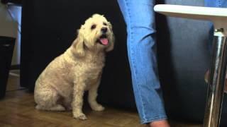 Penn Vet & Pets for Life, Bringing Veterinary Care to the Community of Philadelphia