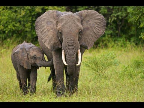 sudan animals السودان جنوب afrique wildlife south asie mister vie