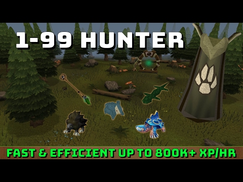 1-99 Hunter Guide! [Runescape 3] Up to 800k+ xp/hr!