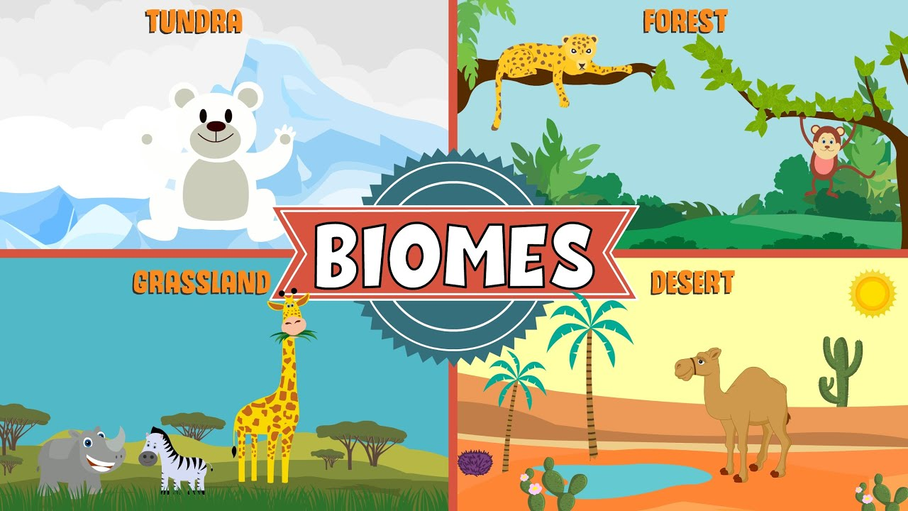 Image result for biomes